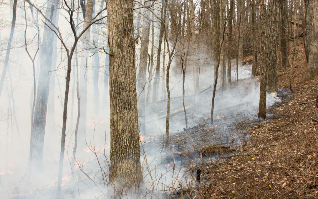 Prescribed fire experiment starts at Tyson Research Center